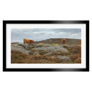 023_Highland_Cows_Framed