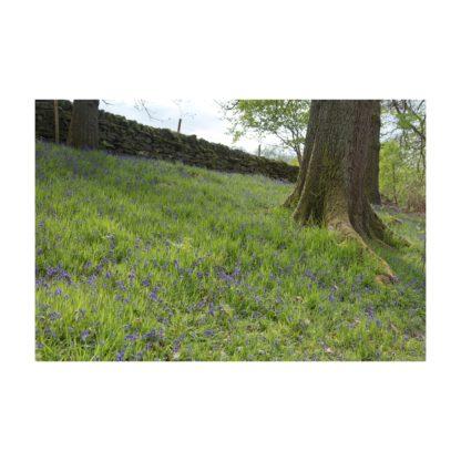 Bluebells Tree