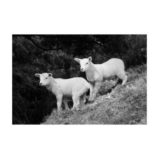 Two Lambs Mono