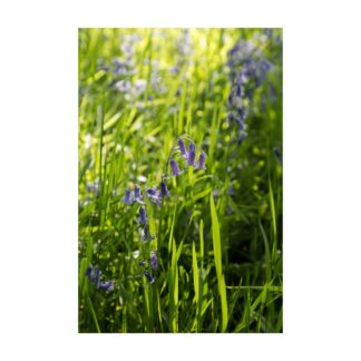 Bluebell Sunlight Detail