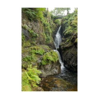 Aira Force Portrait