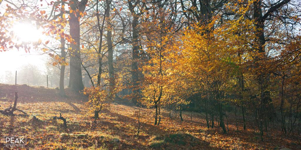 Autumnal Longshaw Sunlight Panoramic