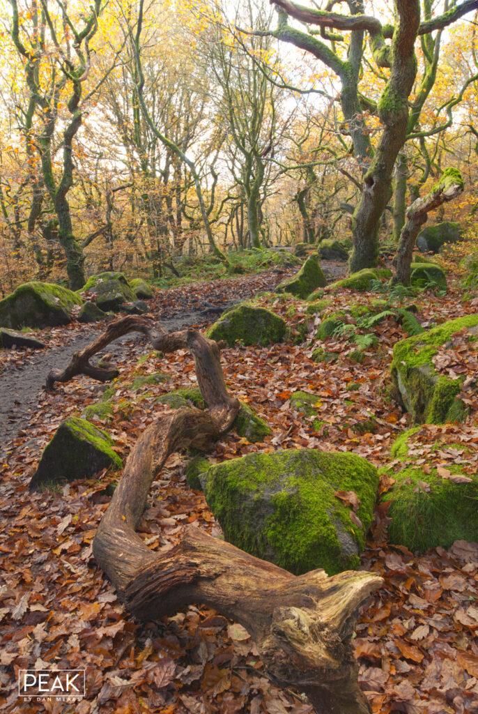 Autumnal Padley Gorge Portrait