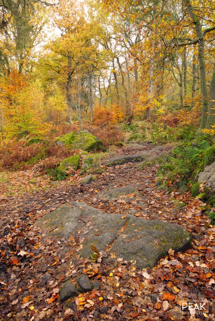Autumnal Padley Gorge Portrait II