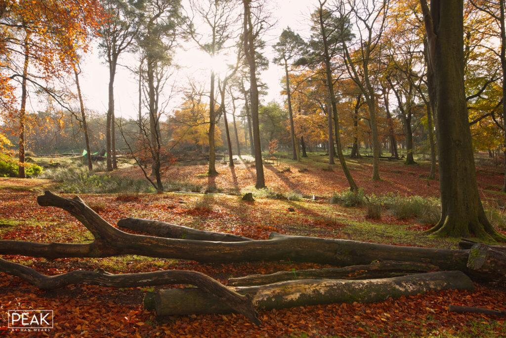 Longshaw Autumn Explosion