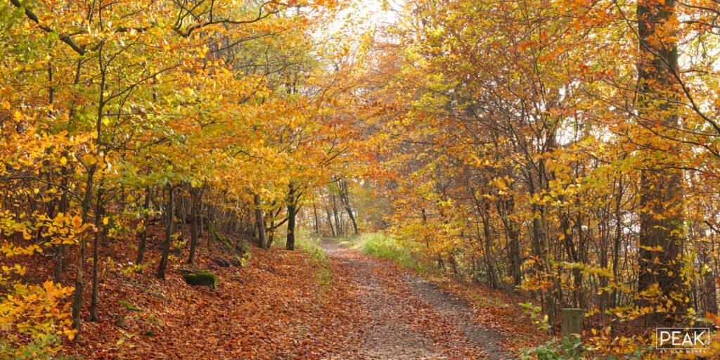 Longshaw Autumnal Path Panoramic