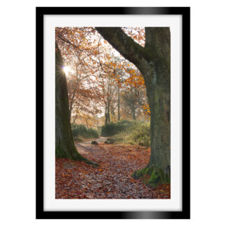 182_Autumnal_Longshaw_Estate_Portrait