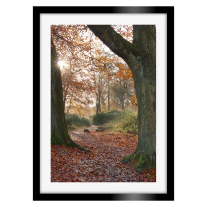 182_Autumnal_Longshaw_Estate_Portrait