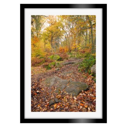 185_Autumnal_Padley_Gorge_Portrait