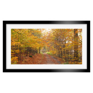 186_Autumnal_Path_Panoramic